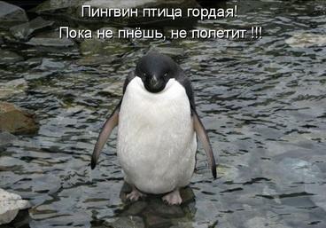 pinguin_giposema
