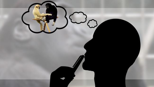 Как не думать о белой обезьяне